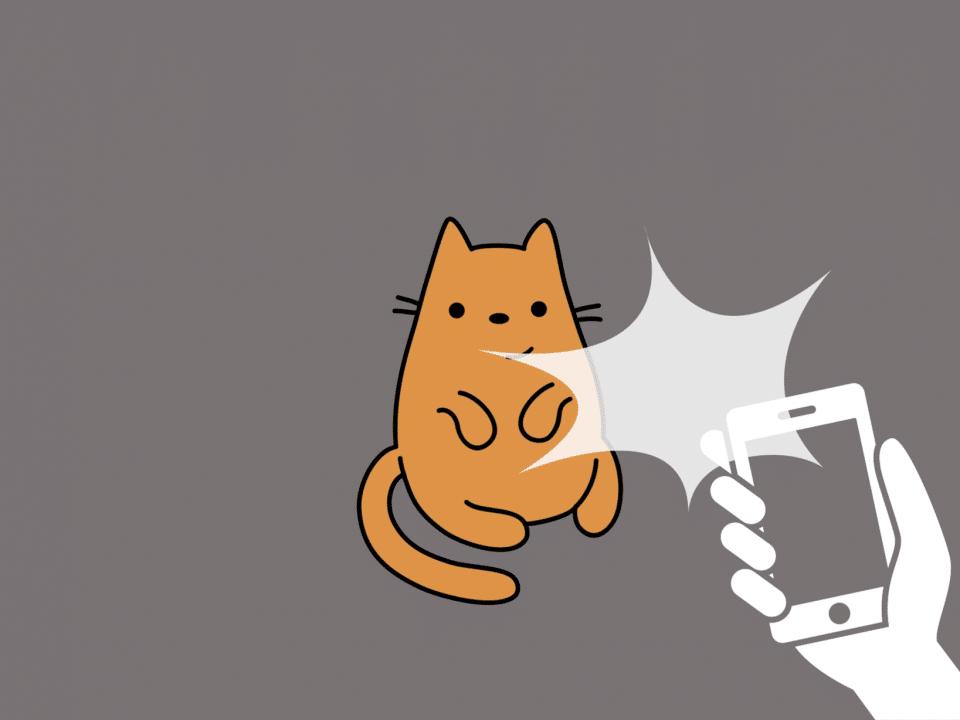 Animation eines Katzenvideos